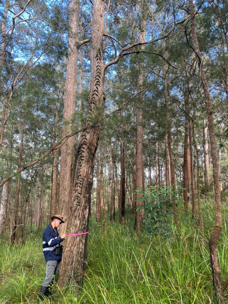 Qualified Botanists in the field tagging protect plants while undertaking Protected Plant Survey in Queensland